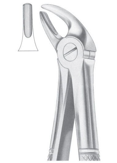 Fig. 4 upper incisors & canines